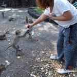 lop buri_SanPhraKan_monkey_feading