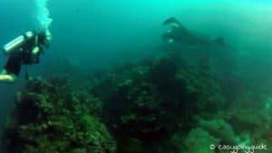 manta_diving_tachai