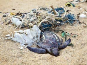 Tod durch Plastik