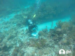 coral survey